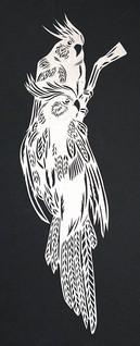 Corella parrots