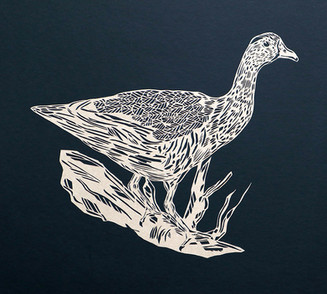 Wandering whisteling duck