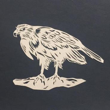 Chilean Falcon