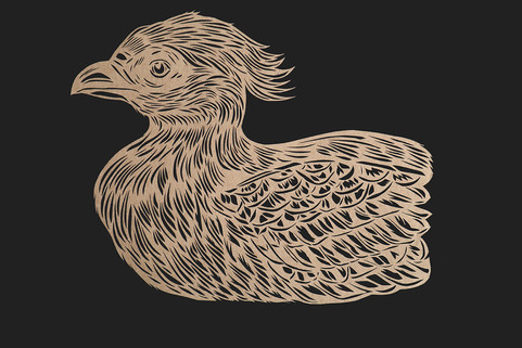 Swinhoe's Pheasant