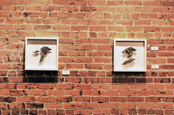 Permanent Gallery, Community Council for the Arts, Kinston, NC 2013