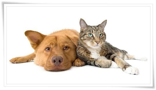 597645-wbal-pets-dog-cat-1566848435.jpg