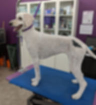 Dog with stencil of a bat