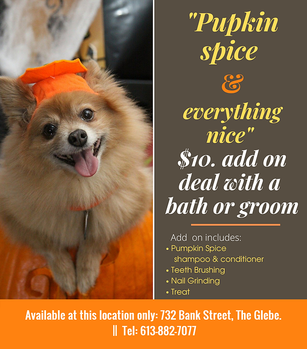 Pupkin spice add on.png