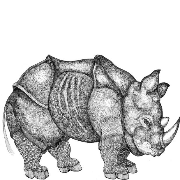 Smaller Durer Rhino