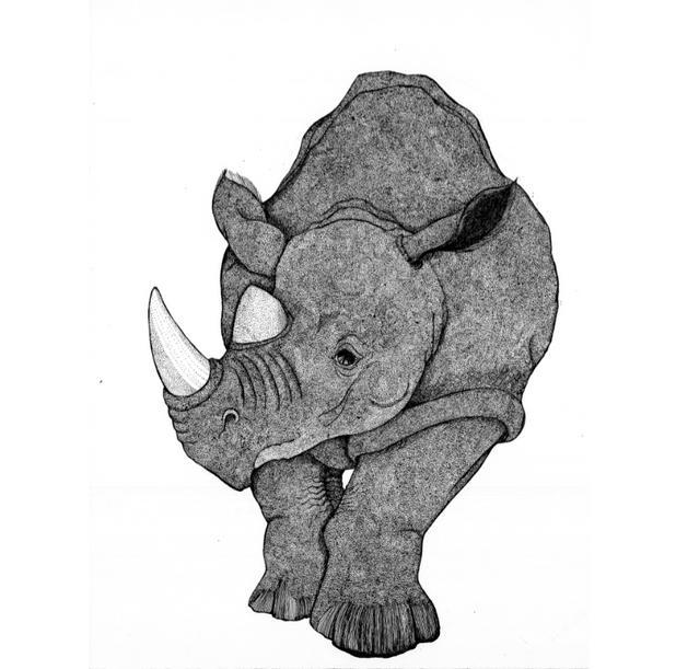 Facing Rhino