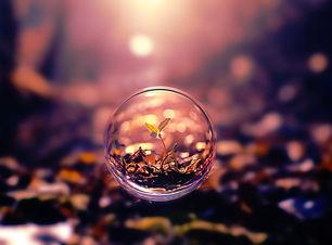 plant-nature-bubble-4K-89.jpg