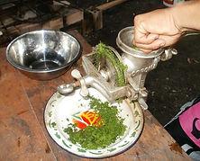 Amazon medicinal plants