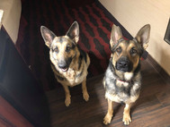 Two sheps at home.jpg