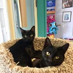 black kittens.jpg