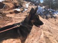 Shep on trail.jpg