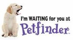 I'm Waiting for You logo.JPG