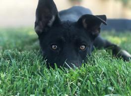 puppy_edited.jpg
