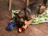 Shep with toys.jpg