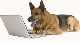 Shepard on laptop.jpg