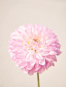 Flower web site 18springsummer voltagebd Images