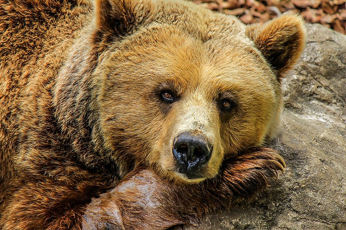 bear-838688_960_720.jpg