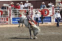 stampede-52714_960_720_edited.jpg