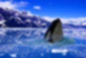 polar-1101562_960_720.jpg