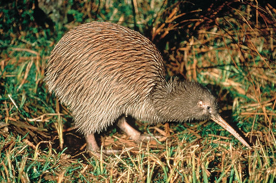 NA12-Rotorua-Rotorua-Tourism-New-Zealand