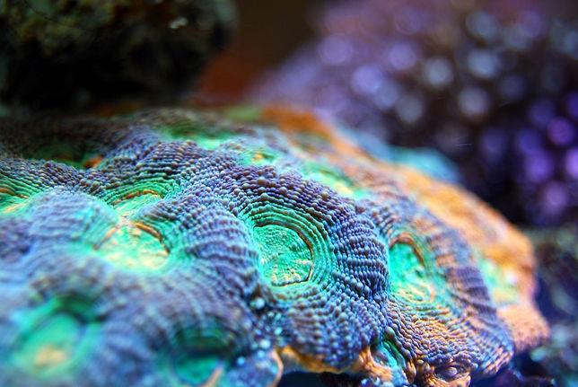 coral-2582513_960_720.jpg