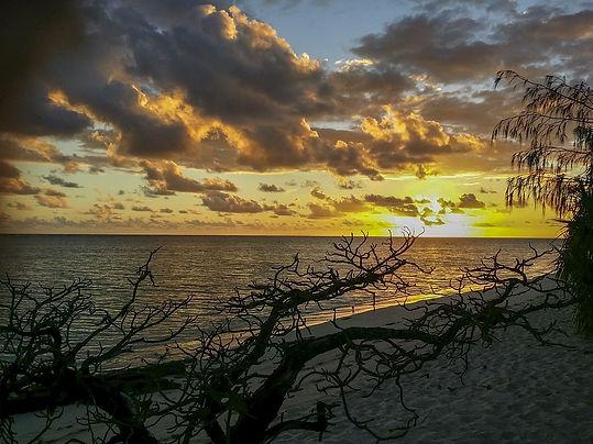 heron-island-746409_960_720.jpg
