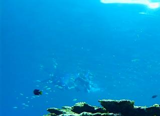 石垣島 青の洞窟シュノーケル&荒川の滝
