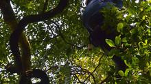 石垣島 ジャックと豆の木を探せ!!ツアー