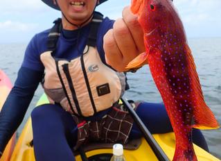石垣島 カヤックフィッシング ツアー