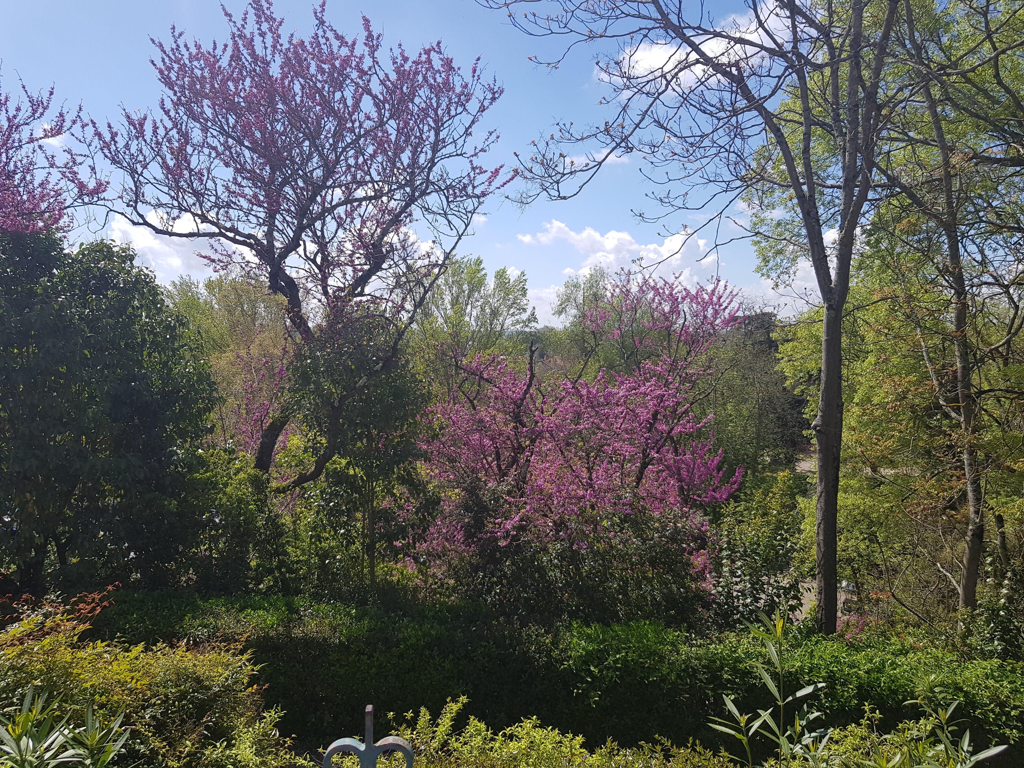 Montauban - Jardin des Plantes