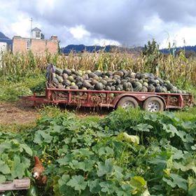 De este lugar provienen la mayor cantidad de verduras que consumo. El productor se llama Hugo, él no usa ningún tipo de químicos y sin ningún intermediario nos vende directamente a los consumidores mediante un sistema de despensas que organizan algunas personas, consumidoras también. Investiga, cerca de donde vives tal vez encuentras un sistema similar. Y si no, siempre puedes organizarlo tú. La ventaja es doble, te alimentas sano y fomentas un tipo de economía que no esclaviza a la madre tierra ni a los productores agrícolas.