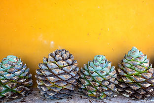 blue-agave-and-a-yellow-wall-PY6XBQ5.jpg