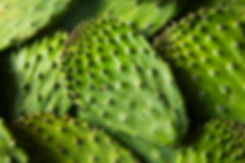 raw-green-organic-cactus-leaf-fruit-PMFV