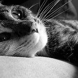 looking cat.jpg