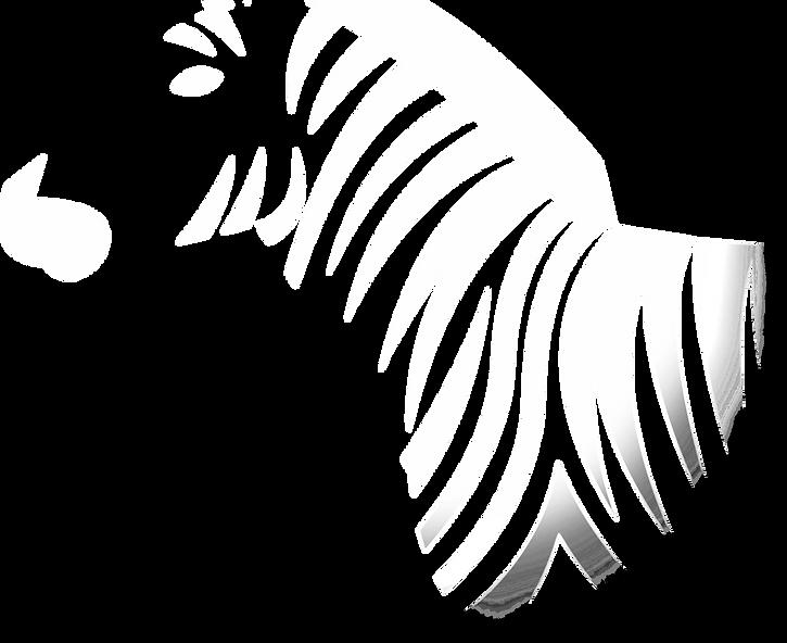 zebra_erased_edited.png