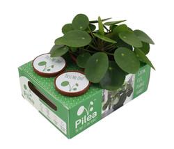 pilea_share_box_1