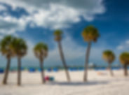 Palm trees on the beach in Clearwater Be