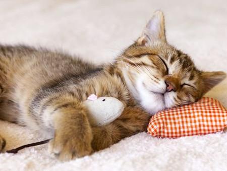 Как научиться высыпаться. Методика вечернего ритуала.