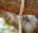 How to hang hammock between trees.png