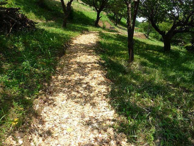 竹山団地16-2ブロックのペット散歩可能な遊歩道の写真。