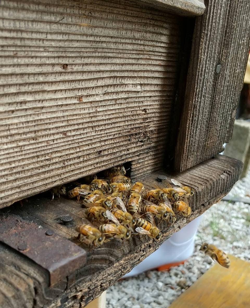すすき野団地に置かれた巣箱からミツバチが飛び出してくる写真
