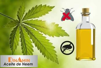 Que es Aceite de Neem