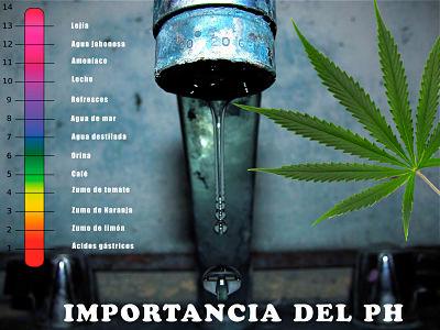 El pH como va con marihuana