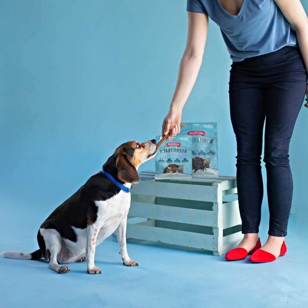 Beagle and Woman