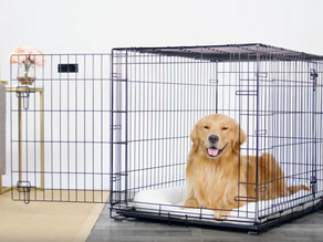 Pet Furniture Expected to Show Continued Growth