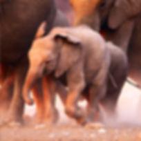 elephants | wildlife
