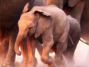 Conservation Africa. Conversation World