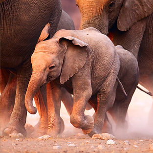 Photo of baby elephant in a herd