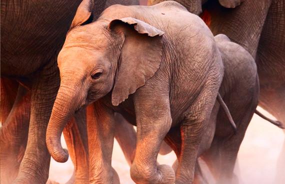 Bebé elefante