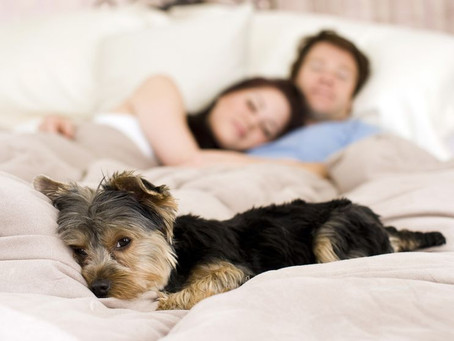 Can Pets Have Bed Bugs?